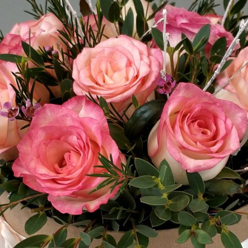 Розовый рассвет