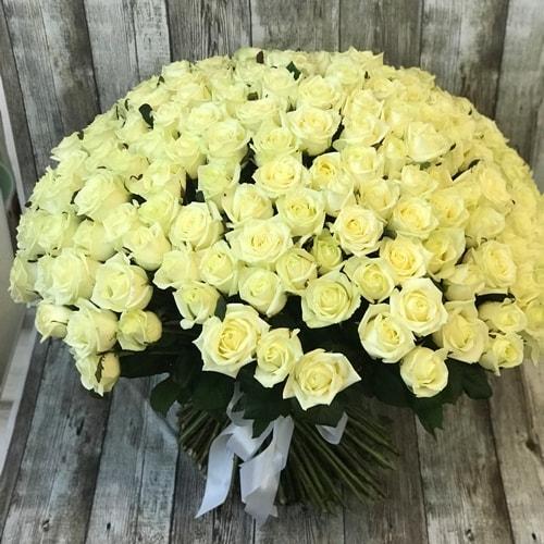 201 белоснежная роза