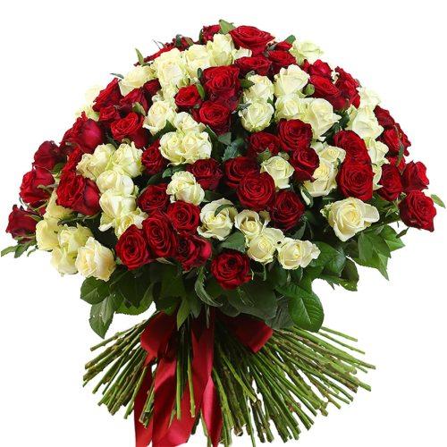 201 бело-красная роза