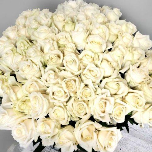 Песня ангела - 101 белая роза