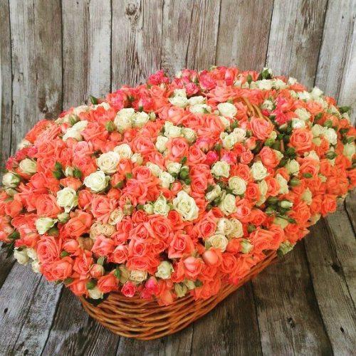 Джулия - 201 кустовая роза