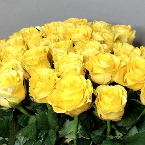 Солнечный зайчик - 35 желтых роз